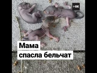 Мама-белка спасла бельчат