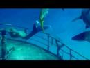 🧜💦🦈🐠🦑🦀🦐🐬🐋🌊 Under The Sea (Acapella) - Muzik 🧜💦🦈🐠🦑🦀🦐🐬🐋🌊