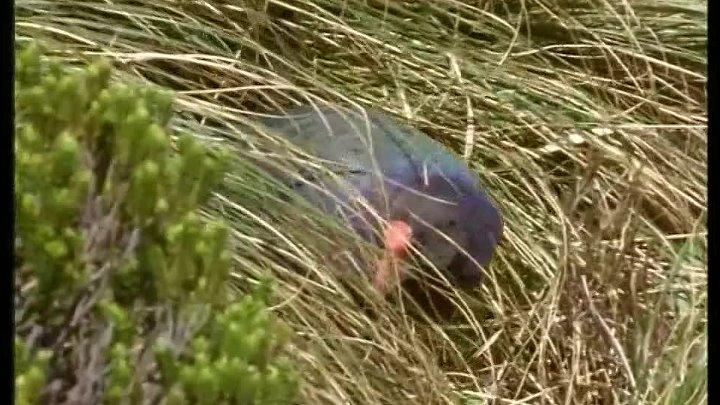 BBC Жизнь птиц 01 Летать или не летать Документальный 1998