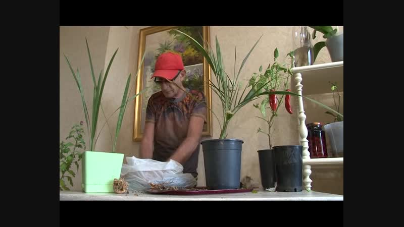 Три минуты о загородной жизни от 07.11.18