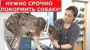 Кожа да Кости.Бездомный щенок с демодекозом и анемией.Ветеринарное ранчо