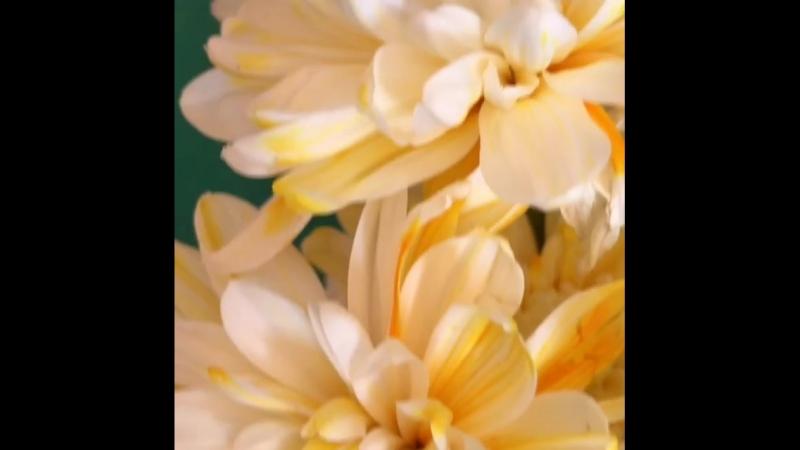 Опыт с окрашиванием хризантем прошёл успешно чудеса✨теперь они разноцветные листай ленту🔜💚💛💚💛💚💛 Детки сначала разводили в воде п
