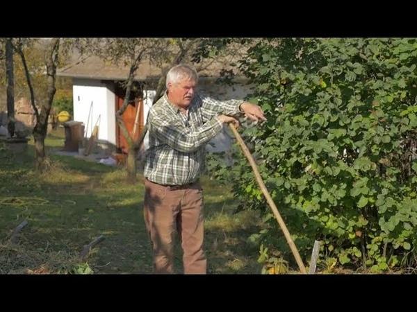 Mélymulcs Újratöltve - Ember és környezetkímélő kertművelés 2