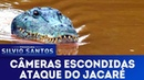 Ataque do Jacaré - Crocodile Attack Prank | Câmeras Escondidas (24/03/19)