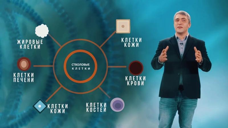 Наука за минуту — Стволовые клетки