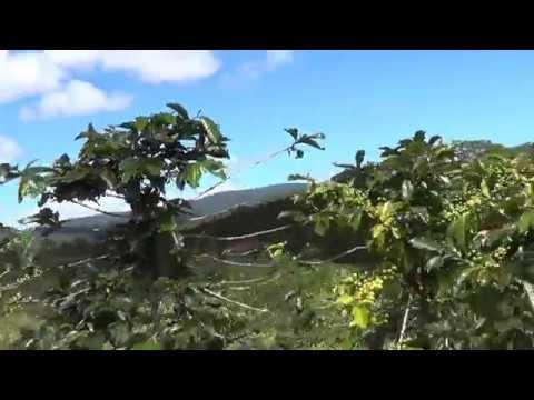 Далат 1 день от РИЦ часть 3 плантации кофе Вьетнам 2018