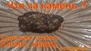 Что за камень найденный в ручье Кварц алмаз топаз корунд лонсдейлит драгоценный сибирь тайга 28 09