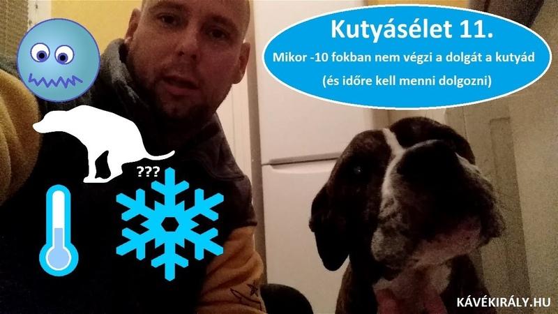 Kutyásélet 11. Mikor -10 fokban nem tojik a kutyád (és időre kell menni dolgozni)