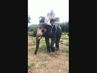 Катание на слонах . Тайланд