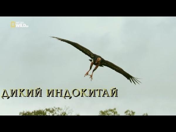 Nat Geo Wild: Дикий Индокитай (1080р)