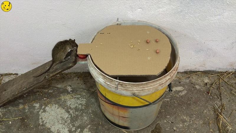 Mouse Trap/Papper Mouse Trap/ DIY make A Rat Trap /Easy Saving A Mice