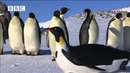 ROBOT PENGUINCAM MEETS EMPEROR PENGUINS FROM PENGUINS SPY IN THE HUDDLE