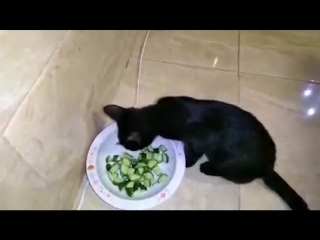 Cat_eats_cucumber