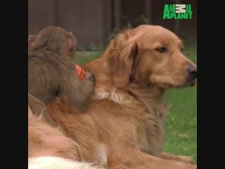 Собакен и обезьян лучшие друзья!