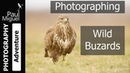 Hide Photography Buzzards Set to Music