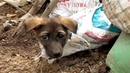 Dirty Landfill Puppy Rescued Anbandoned Puppies Rescued Will Melt Your Heart