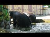купание слонов)