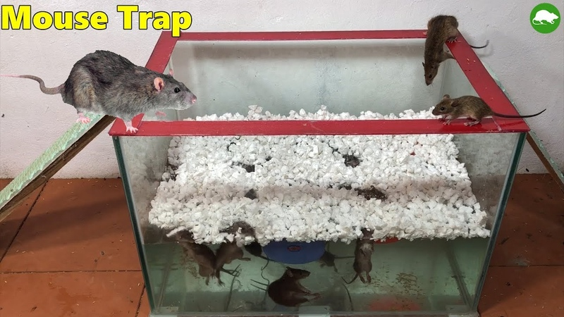 Top Mouse TrapHow to make a Mouse Trap Handmade with Glass WaterRat Reject