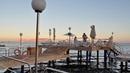 Обзор отеля Marbella Resort hotel 4* Шарджа, ОАЭ - бюджетный отель.