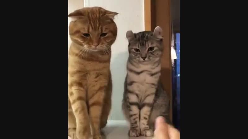 Разная реакция двух котеек!