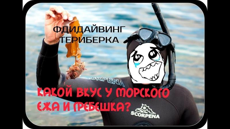 Какой вкус у морского ежа и гребешка? Фридайвинг. Териберка. Мурманск