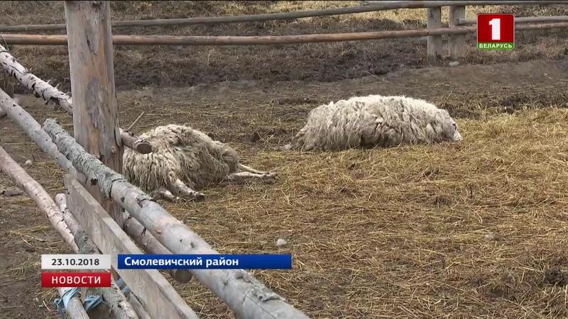 Чупакабра напала на фермерское хозяйство