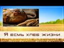 Проповедь «Я есмь хлеб жизни...» — Андрей П. Чумакин.