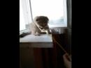 мимишная Бусина играет с мышой на подоконнике