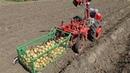 Копка картошки с КОНТЕЙНЕРОМ Легко УБИРАЮ урожай САМ