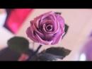 Живые розы в колбе