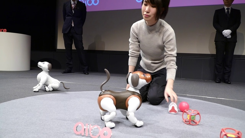 Aibo 'choco edition' at Sony headquarters [RAW VIDEO]