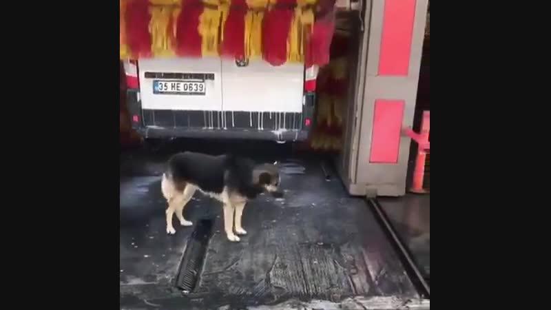 Пёс по кличке Кёрхер 😀