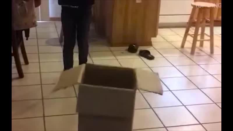 Бегите глупцы umorvoronezh