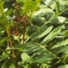 Пчёлка труженица сочи природа осень ятебе