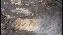 На берегу фекальные речки в Видном обустроят пляж