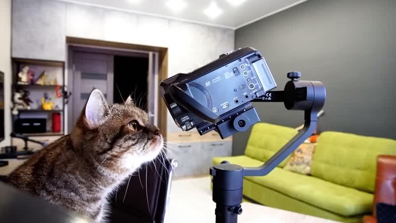 Проверка на кошках дистанционного управления Moza AirCross
