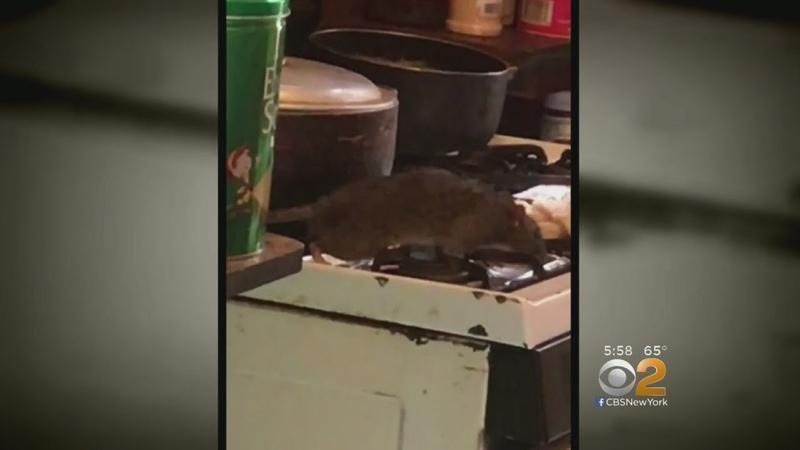 Rats Invade NYCHA Housing