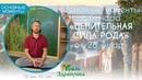 Основные моменты вебинара «ЦЕЛИТЕЛЬНАЯ СИЛА РОДА» от 28 января Александр Волосков