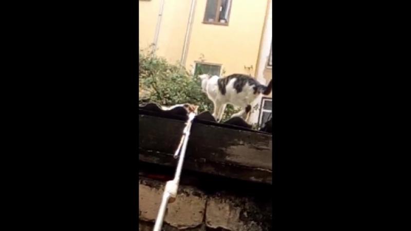 котят кошка занесла на крышу