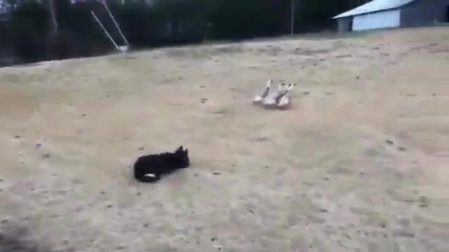 Собачий спецназ Canine special forces
