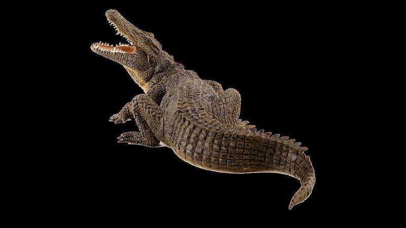 TRILOGY OF LIFE - Walking with Dinosaurs - Deinosuchus