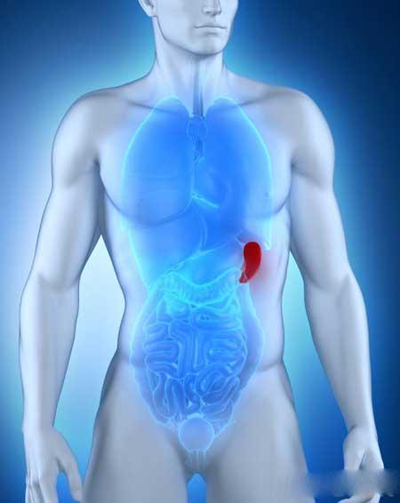Множество различных состояний может привести к опуханию печени и селезенки.