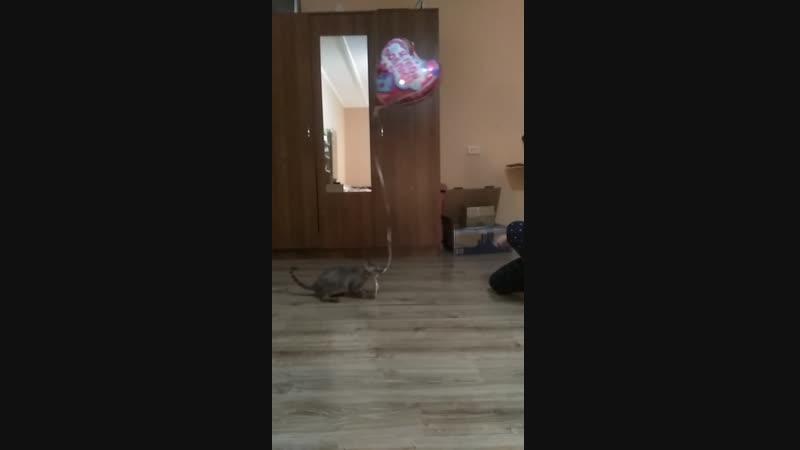 Дастин и шарик2
