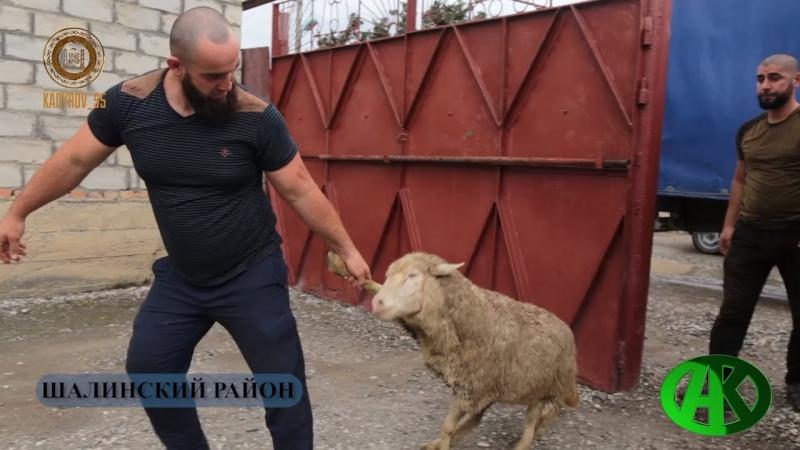 РОФ им.А-Х.Кадырова ежегодно организовывает благотворительную акцию в канун дня Курбан-Байрам.
