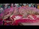Gangaram, the crocodile laid to rest!