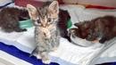 Выбросить котят на улицу и не получить наказание это уродливая норма в России Help kittens
