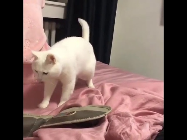 Кот и бит бокс