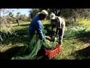 Оливковое масло Villa Montecchio Из чего это сделано