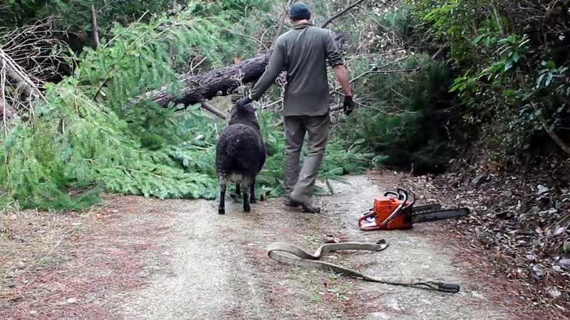 Dodge Ram tries to stop me cutting down trees