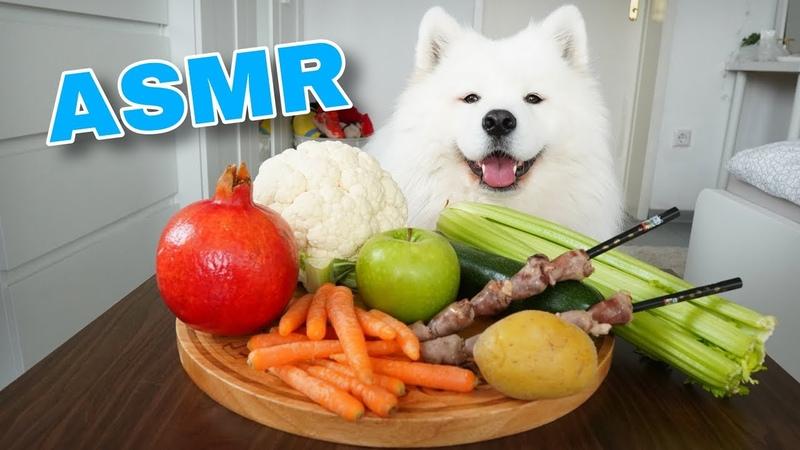 ASMR Dog Reviewing Different Types of Food 4 I MAYASMR